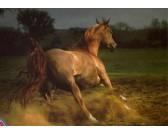 Puzzle Barna ló