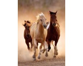 Puzzle Futó lovak