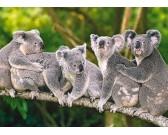 Puzzle Koalacsalád - GYEREK PUZZLE