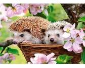 Puzzle Sündisznók tavasszal - GYEREK PUZZLE