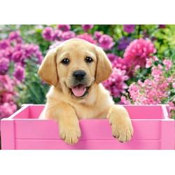 Puzzle Labrador kölyök rózsaszín dobozban - GYEREK PUZZLE