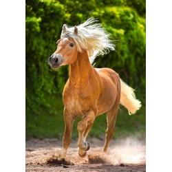 Puzzle Barna ló futásban