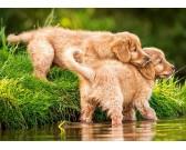 Puzzle Kiskutyák a folyóban - GYEREK PUZZLE