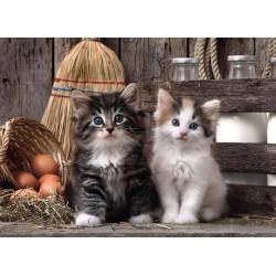 Puzzle Két cica