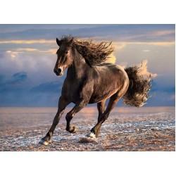 Puzzle Szabad ló