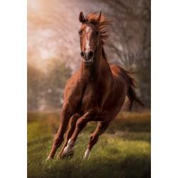 Puzzle Barna ló futás közben