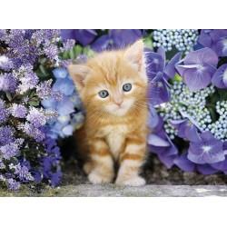 Puzzle Vörös cica