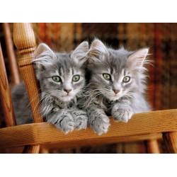 Puzzle Foltos kiscicák
