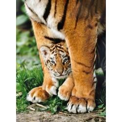 Puzzle Bengál tigris kölyke