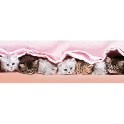Puzzle Cicák a takaró alatt - GYEREK PUZZLE