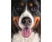 Puzzle Szőrös kutya - GYEREK PUZZLE