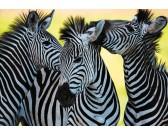 Puzzle Három zebra