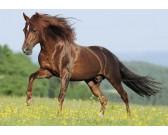 Puzzle Ló a réten