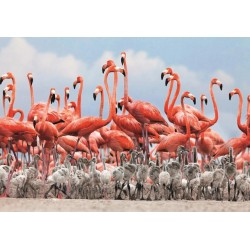 Puzzle Flamingók