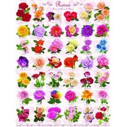 Puzzle Rózsák