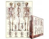 Puzzle Emberi csontváz - schéma