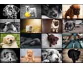 PuzzleKollázs - kutyák