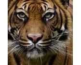 Puzzle Tigris - MINI PUZZLE