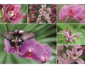 Puzzle Orhideák