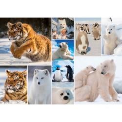 Puzzle Sarkvidéki állatok