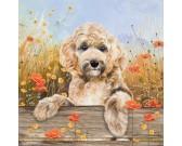 Puzzle Aranyos kutyus