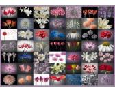 Puzzle A virágok köszöntése