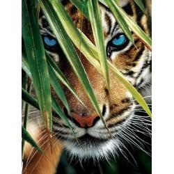 Puzzle Kék szemek