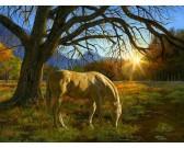 Puzzle Ló a legelőn