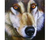 Puzzle A farkas arca