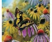 Puzzle Pillangó a virágok között