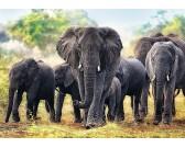 Puzzle Afrikai elefántok
