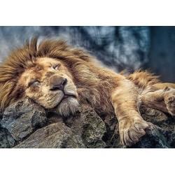 Puzzle Alvó oroszlán