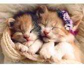 Puzzle Alvó cicák
