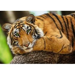Puzzle Fiatal tigris